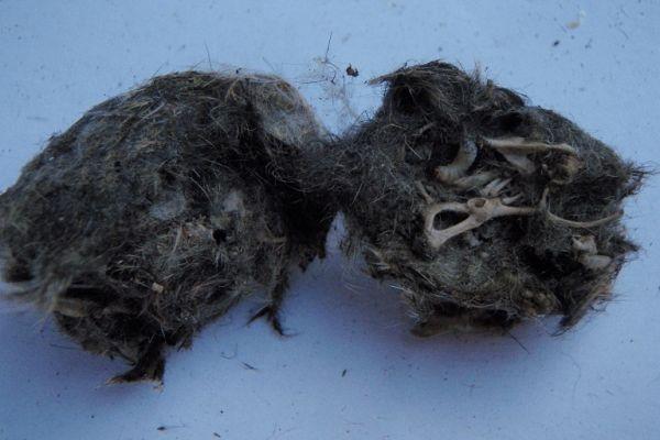 pellets8athirdA301C01F-9204-52A2-DFD9-55F4D914EBA0.jpg